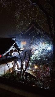 夜桜3.JPG